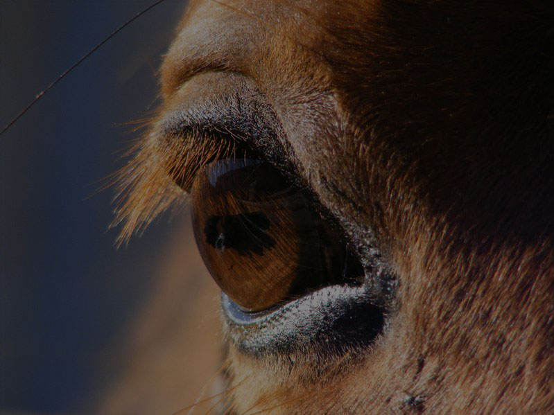 Close up of brown horse eye