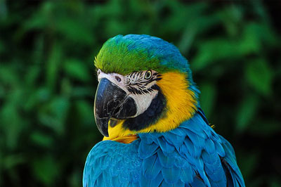 parrot-colorful-plumage-portrait