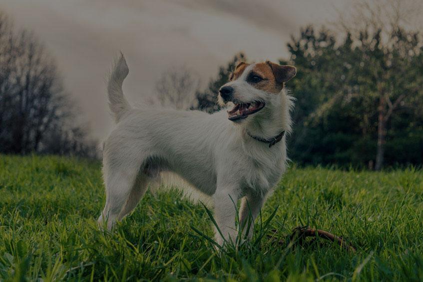 cute dog in the grass