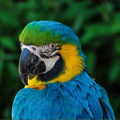 parrot-colorful-plumage-portrait