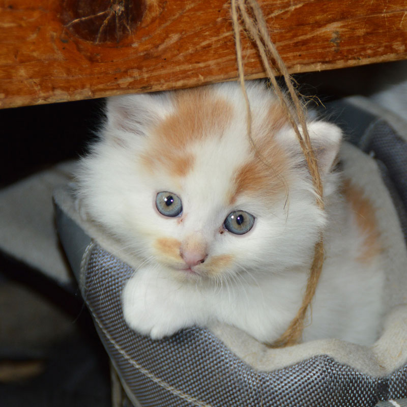 cat-pets-cat-s-eyes-mieze-dear