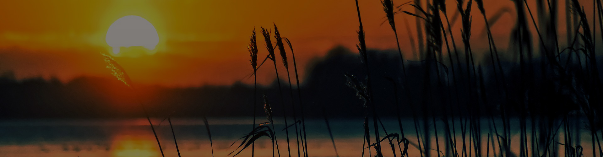 Sun setting behind the reeds
